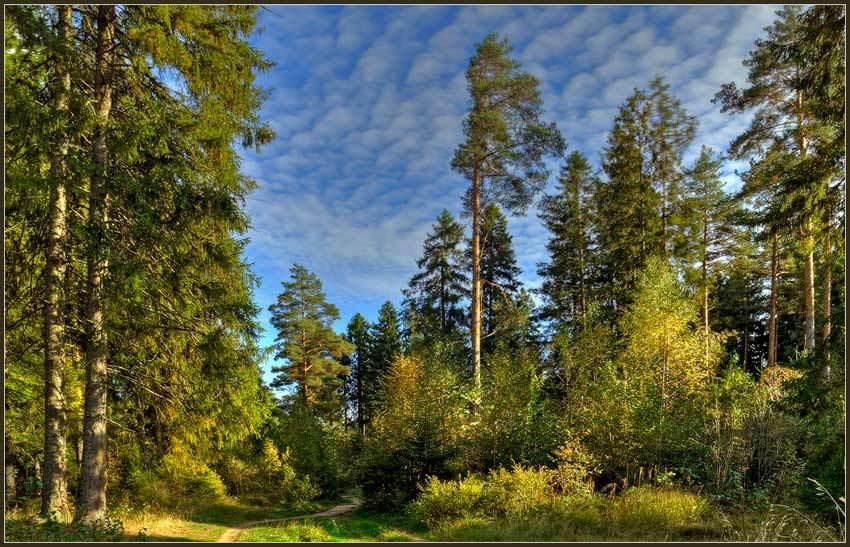 Фотографию русский лес в новом окне