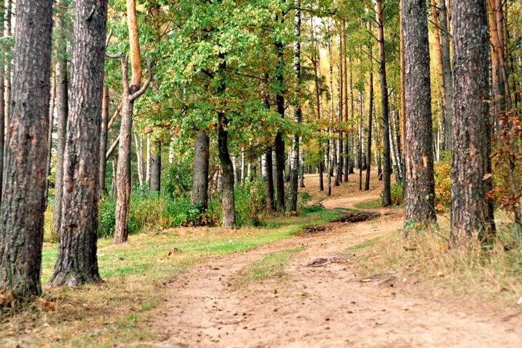 Смотреть фотографию лес дорога в